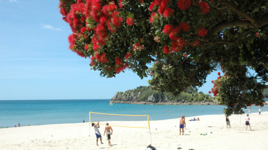 Summer-in-New-Zealand.jpg#asset:2543:listbanner